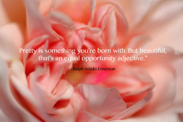 Pretty Quote with Rose Photo by Naomi Estment